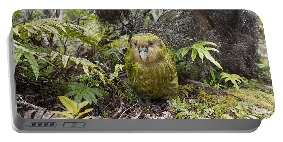Tui De Roy Portable Battery Charger featuring the photograph Kakapo Male In Forest Codfish Island by Tui De Roy