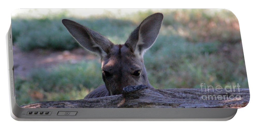 Kangaroo Portable Battery Charger featuring the photograph Kangaroo-4 by Gary Gingrich Galleries