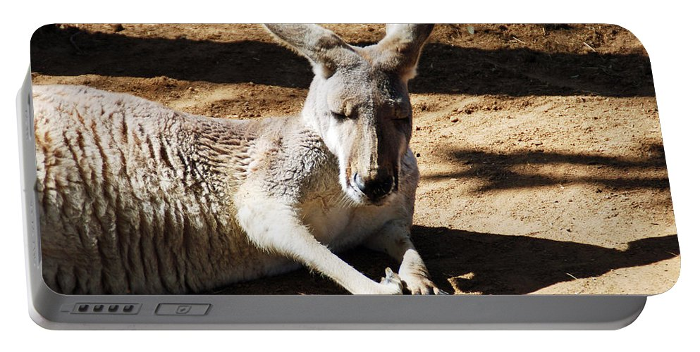 Kangaroo Portable Battery Charger featuring the photograph Kangaroo by Aimee L Maher ALM GALLERY