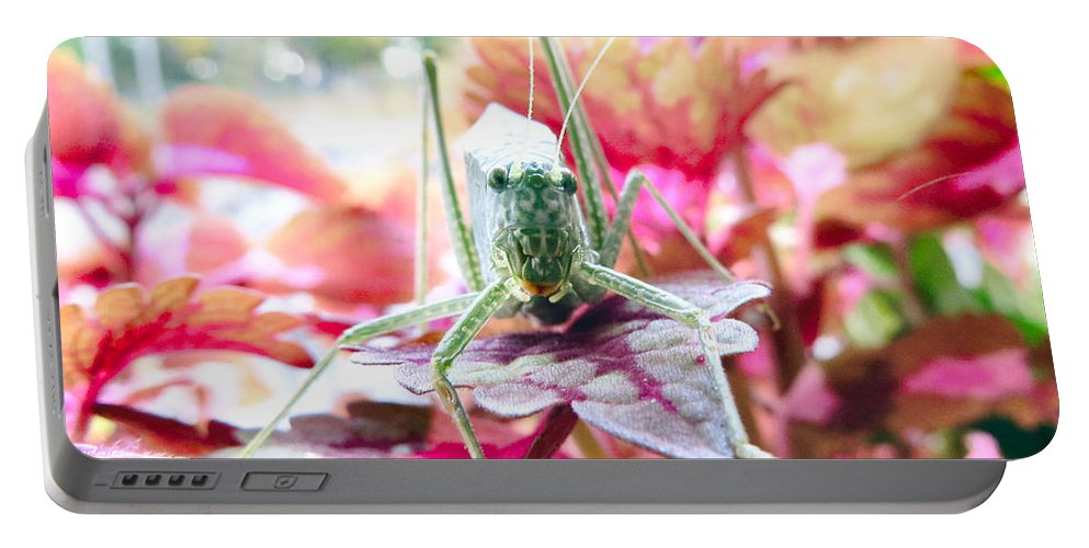 Katydid Portable Battery Charger featuring the photograph Katydid Face by Art Dingo