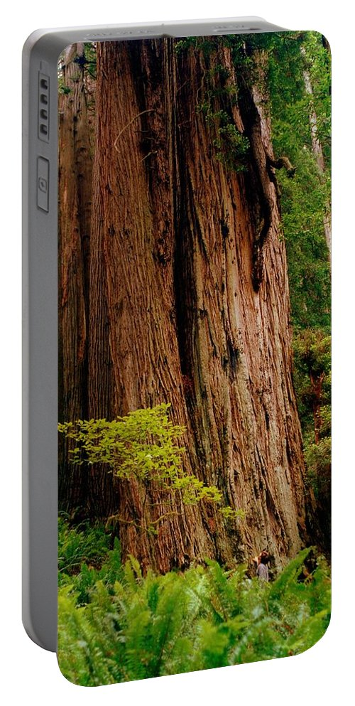 Ferns Portable Battery Charger featuring the photograph Kevin And The Big Tree - Redwood National Forest by Michelle Calkins