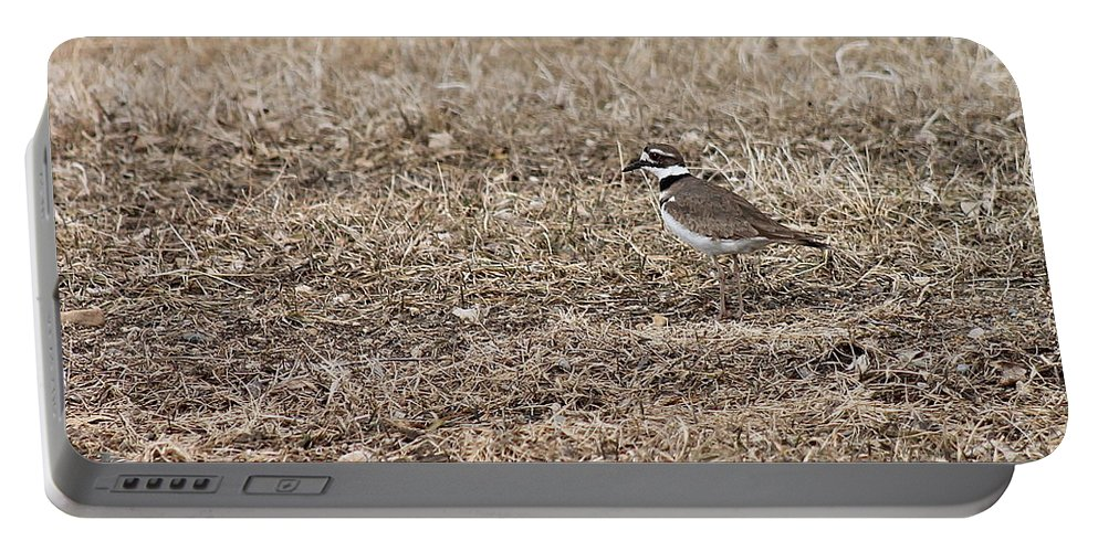 Birds Portable Battery Charger featuring the photograph Killdeer by Wayne Williams