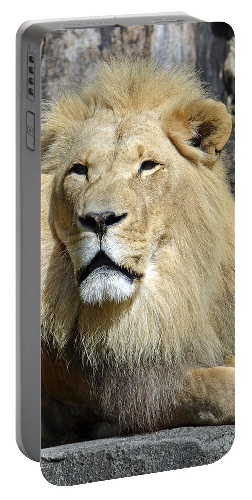 Lion Portable Battery Charger featuring the photograph King Of Beasts by Shanna Hyatt