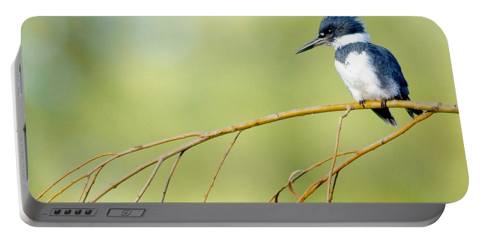 Black Knight Holdings � 2011 Portable Battery Charger featuring the photograph Kingfisher On A Willow by Randy Giesbrecht