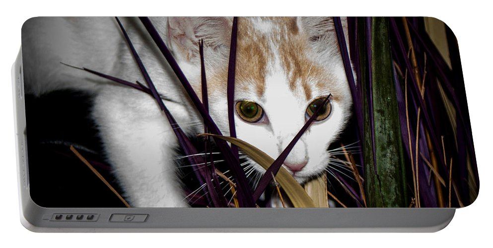 Kitten In The Plant Portable Battery Charger featuring the photograph Kitten In The Plant by Mechala Matthews