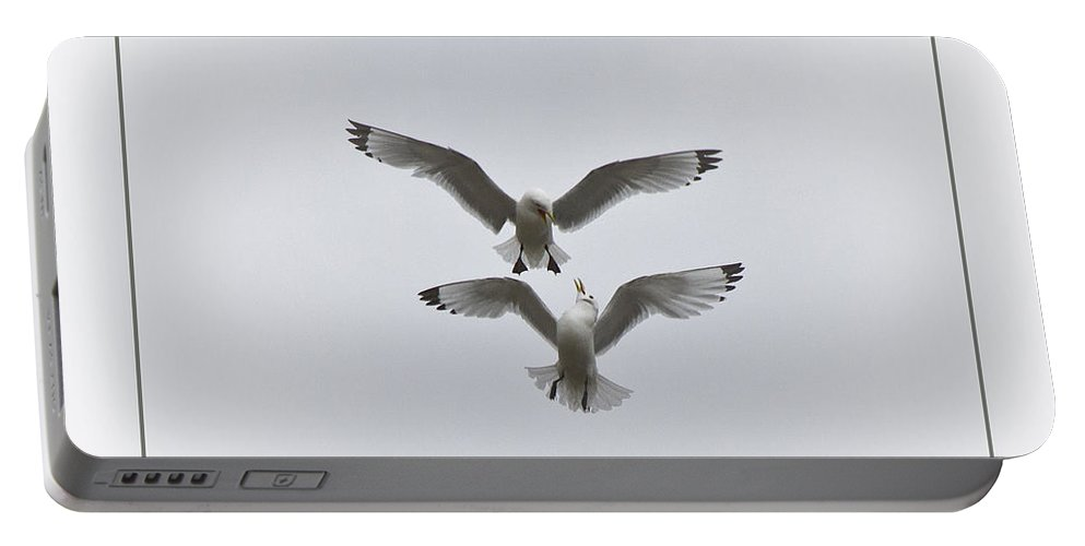 Seagull Portable Battery Charger featuring the photograph Kittiwakes Dancing In The Air by Heiko Koehrer-Wagner