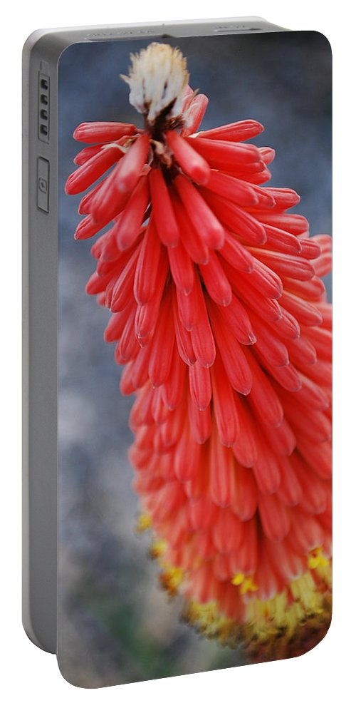 Becky Furgason Portable Battery Charger featuring the photograph #kniphofiauvaria by Becky Furgason