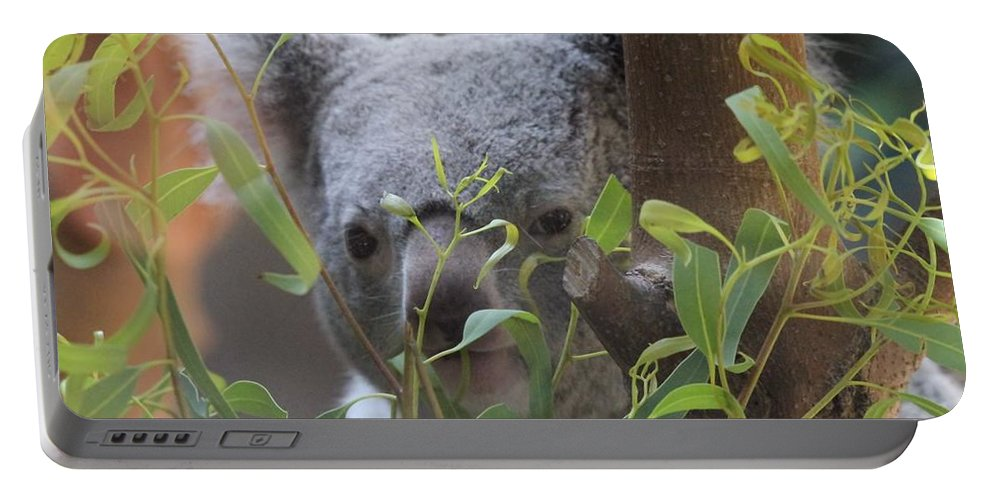 Shy Koala Portable Battery Charger featuring the photograph Koala Bear by Dan Sproul
