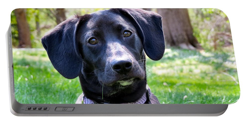 Dog Portable Battery Charger featuring the photograph Lab Works by Art Dingo