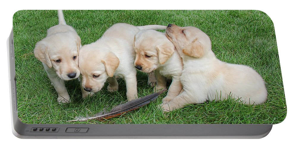 Puppy Portable Battery Charger featuring the photograph Labrador Retriever Puppies And Feather by Jennie Marie Schell