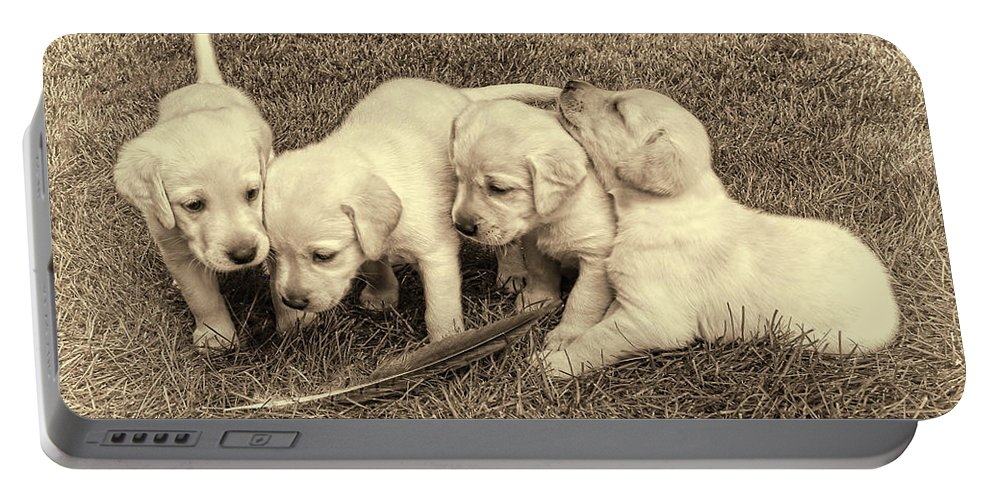 Puppy Portable Battery Charger featuring the photograph Labrador Retriever Puppies And Feather Vintage by Jennie Marie Schell