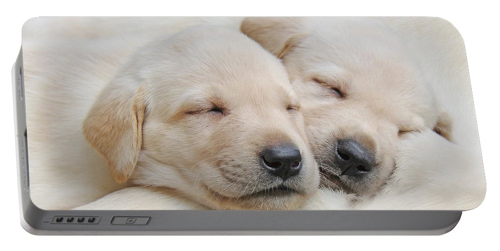 Puppy Portable Battery Charger featuring the photograph Labrador Retriever Puppies Sleeping by Jennie Marie Schell