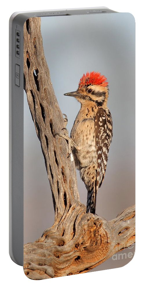 Woodpecker Portable Battery Charger featuring the photograph Ladder-backed Woodpecker by Bryan Keil