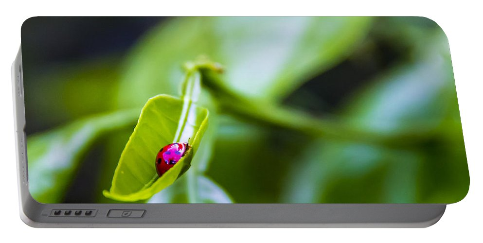 Ladybug Portable Battery Charger featuring the photograph Ladybug Cup by Marvin Spates