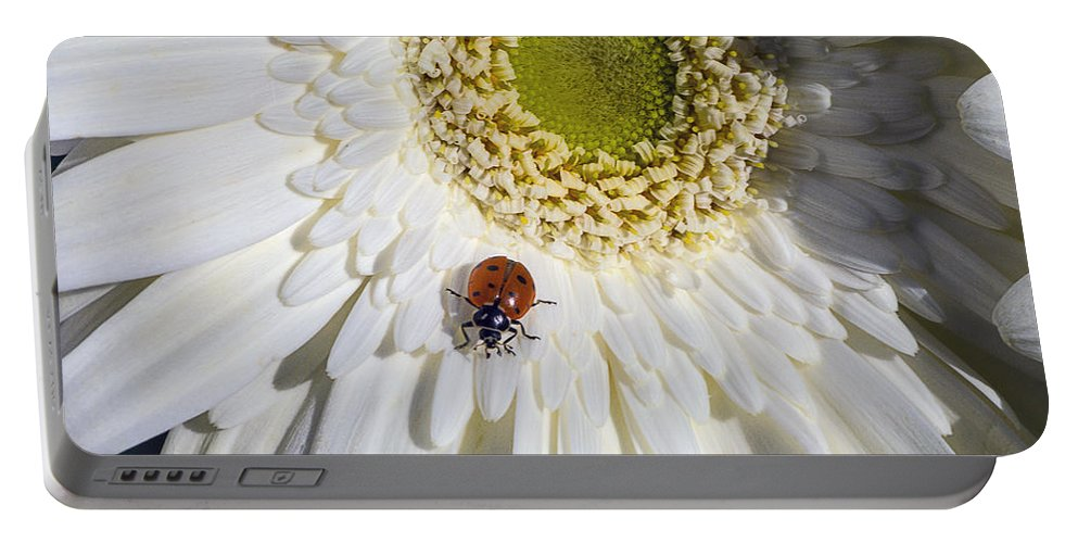 Ladybugs Bug Portable Battery Charger featuring the photograph Ladybug by Garry Gay