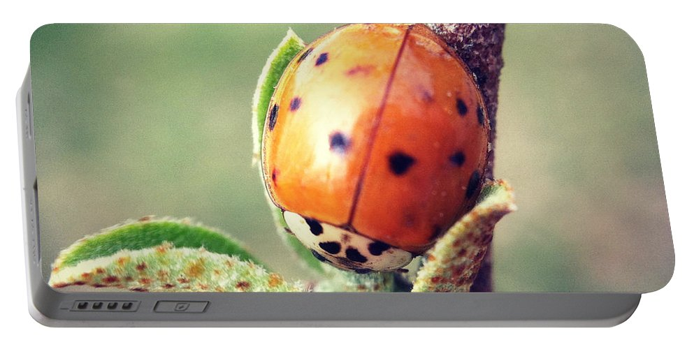 Ladybug Portable Battery Charger featuring the photograph Ladybug by Kerri Farley