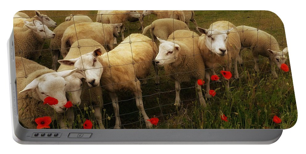 Animal Portable Battery Charger featuring the photograph Lambs by TouTouke A Y