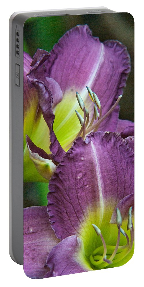 Lilies Portable Battery Charger featuring the photograph Lavender Beauties by Douglas Barnett