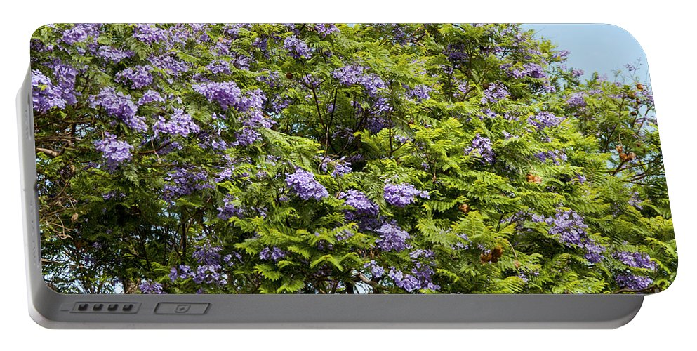Lavender-colored Blossoms Jacaranda Mimosifolia Tree Haleakala Highway East Maui Hawaii Nature Bloom Blooms Blossom Blossoms Portable Battery Charger featuring the photograph Lavender-colored Blooming Tree by Bob Phillips