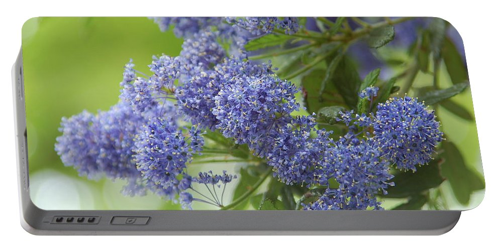Lavender Portable Battery Charger featuring the photograph Lavender Pompoms by Kathy McCabe