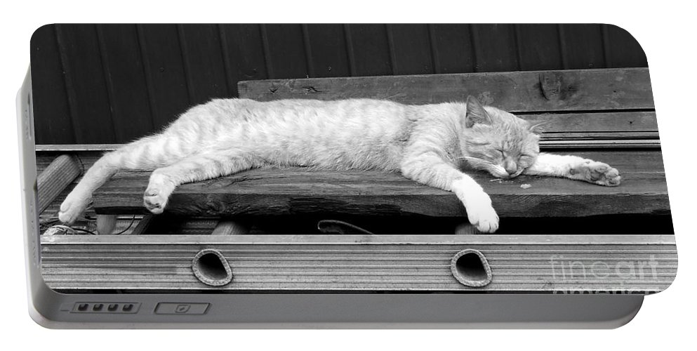 Lazy Portable Battery Charger featuring the photograph Lazy Cat by Andrea Anderegg