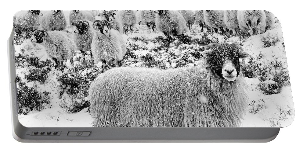 Swaledale Portable Battery Charger featuring the photograph Leader Of The Flock by Janet Burdon