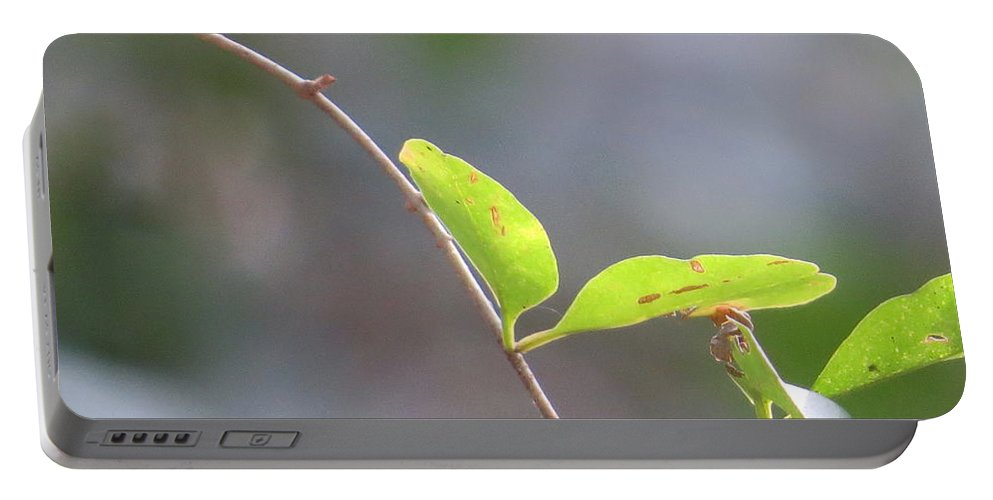 Outdoors Portable Battery Charger featuring the photograph Leaf by Aaron Martens