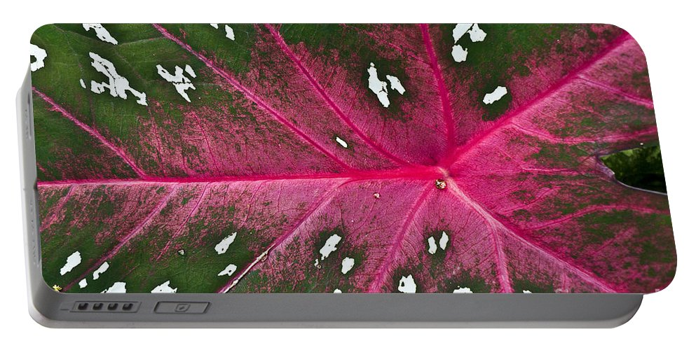 Heiko Portable Battery Charger featuring the photograph Leaf Detail by Heiko Koehrer-Wagner