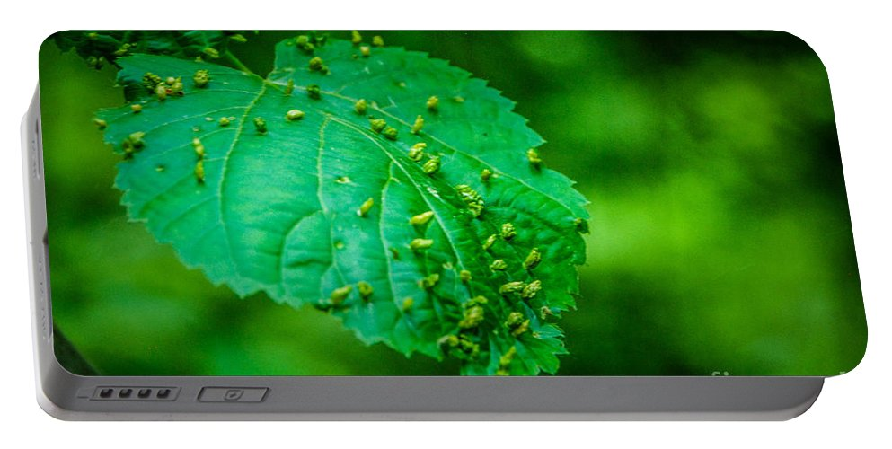 Leaf Portable Battery Charger featuring the photograph Leaf Gall by Grace Grogan