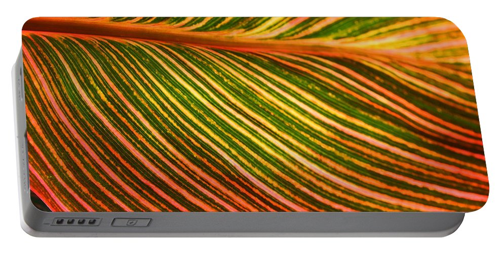 Leaf Portable Battery Charger featuring the photograph Leafscape 2 by Laurel Talabere