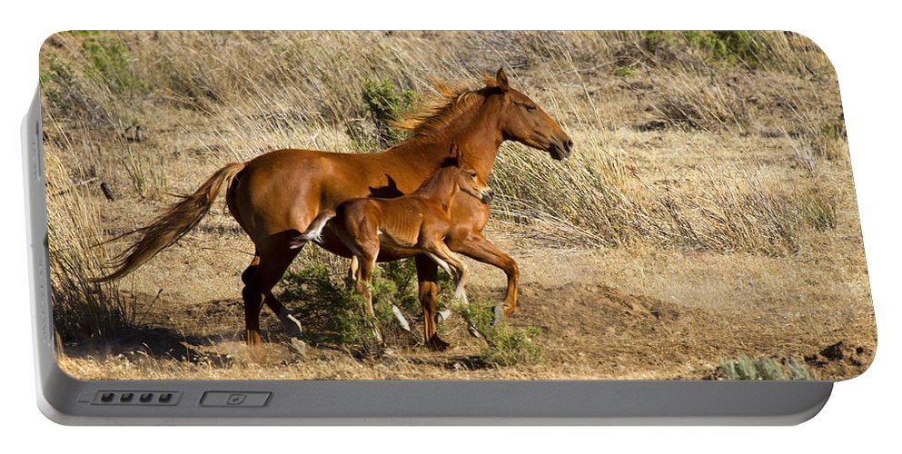 Colt Portable Battery Charger featuring the photograph Learning To Run by Mike Dawson