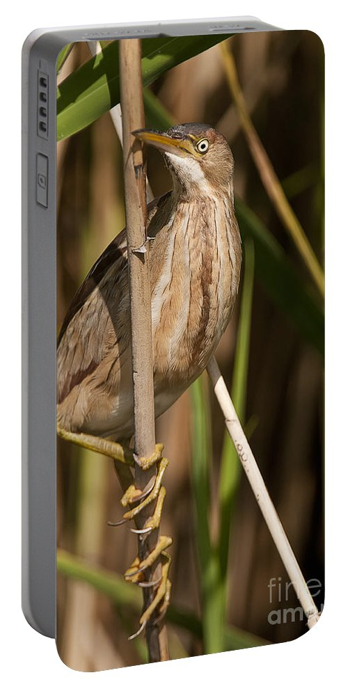 Least Bittern Portable Battery Charger featuring the photograph Least Bittern Pictures 14 by World Wildlife Photography