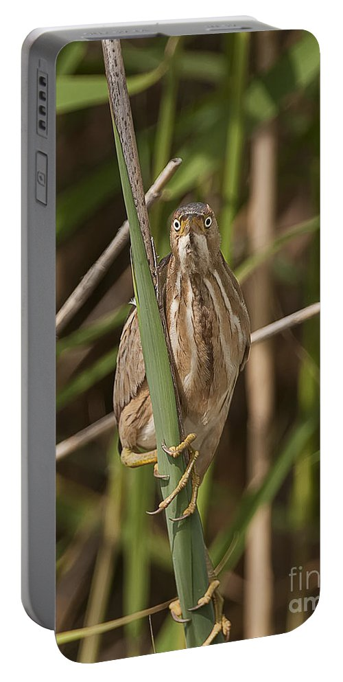 Least Bittern Portable Battery Charger featuring the photograph Least Bittern Pictures 22 by World Wildlife Photography