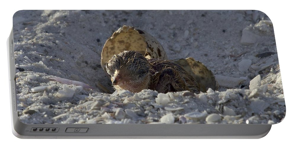 Least Tern Portable Battery Charger featuring the photograph Least Tern Hatchling by Meg Rousher