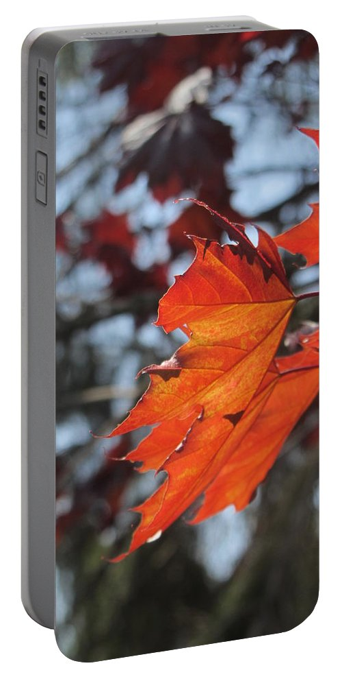 Leaf Portable Battery Charger featuring the photograph Leaves Backlit 3 by Anita Burgermeister
