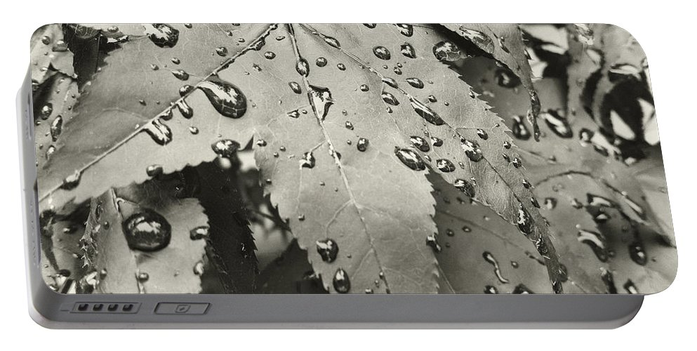 Leaves Portable Battery Charger featuring the photograph Leaves In Rain by Cathy Anderson