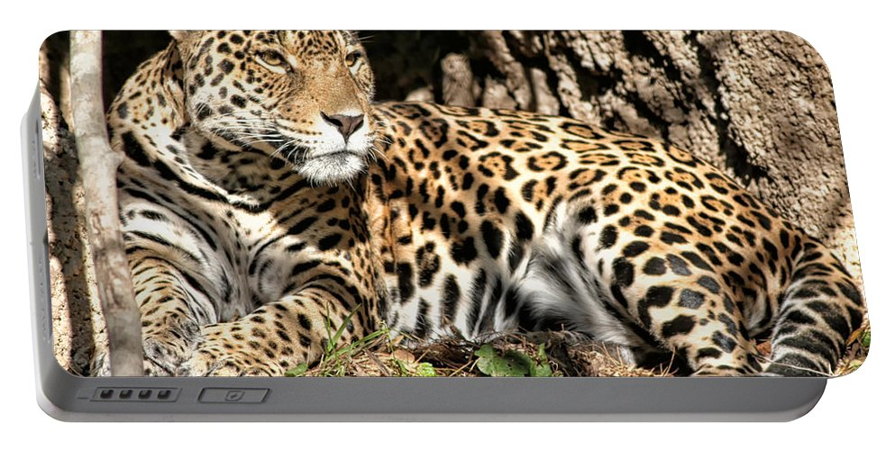 Leopard Portable Battery Charger featuring the photograph Leopard by Debby Richards