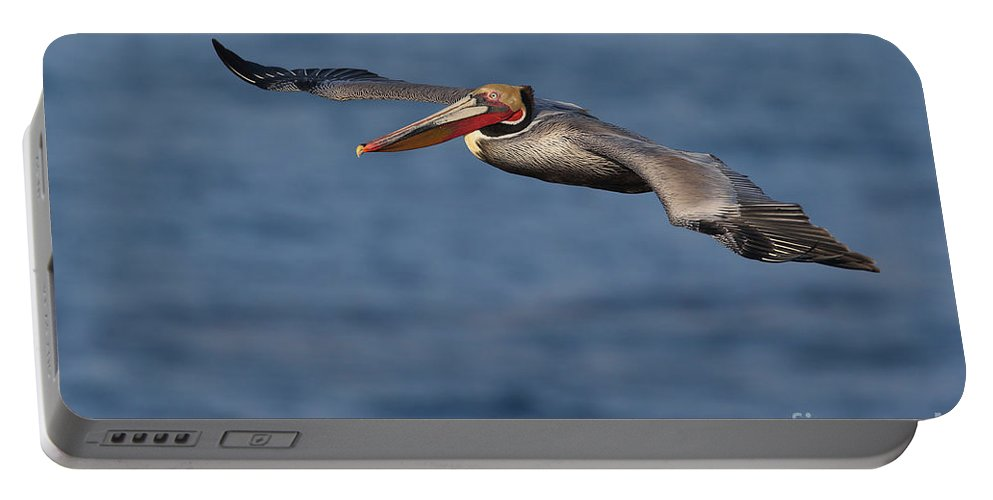 Brown Pelican Portable Battery Charger featuring the photograph Let's Fly by Bryan Keil