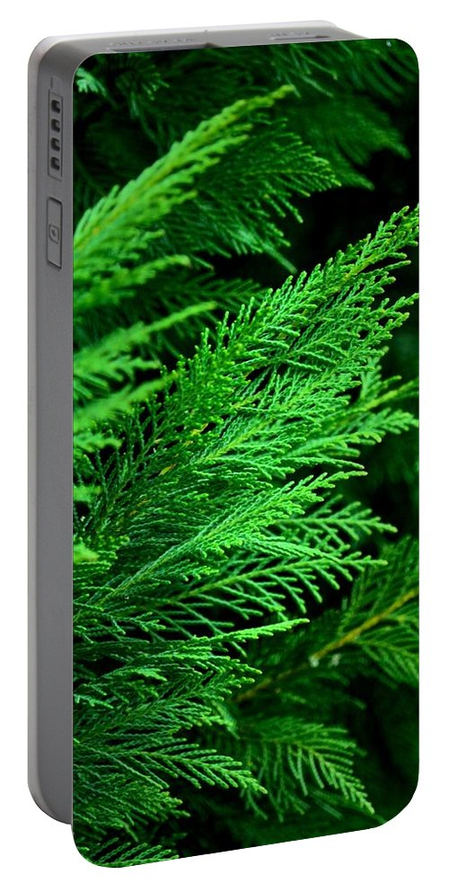 Leyland Cypress Portable Battery Charger featuring the photograph Leyland Cypress by Maria Urso