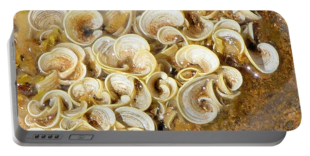Sea Life Portable Battery Charger featuring the photograph Life On The Rocks by Mary Deal