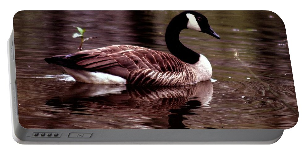 Canadian Goose; Canadian Geese; Geese; Goose; Water Portable Battery Charger featuring the photograph Lila Queen Of The Pond by Lesa Fine