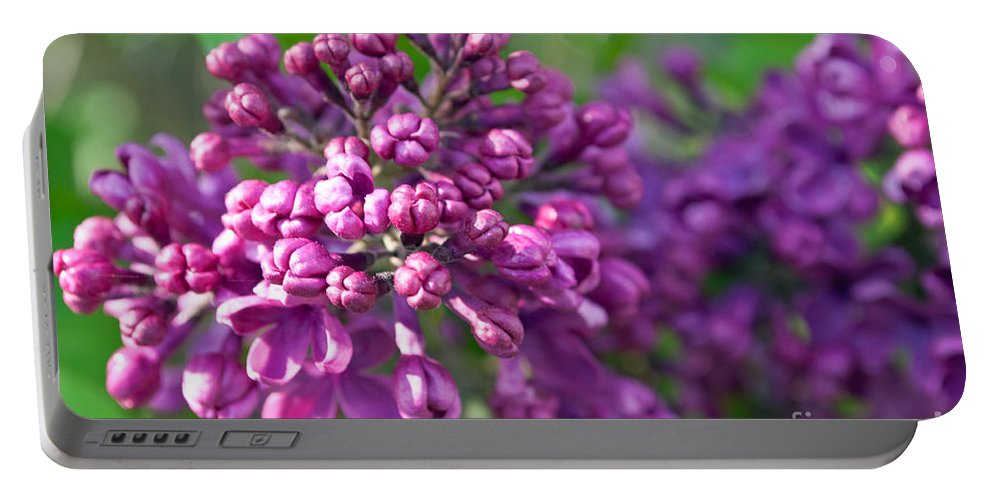 Lilac Portable Battery Charger featuring the photograph Lilac Dizzy by Gwyn Newcombe