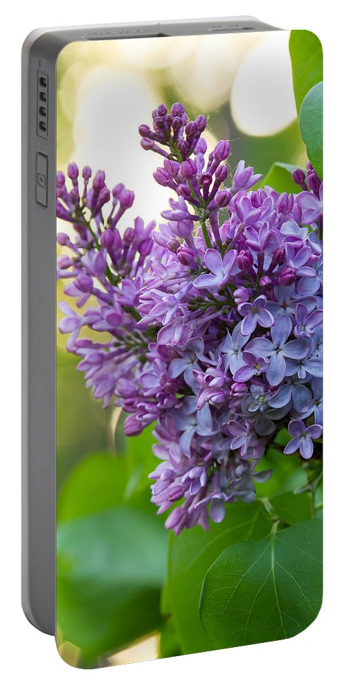 Lilacs Portable Battery Charger featuring the photograph Lilac Heaven by Penny Meyers