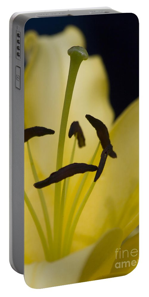 Flower Portable Battery Charger featuring the photograph Lilium In Yellow by Nola Lee Kelsey