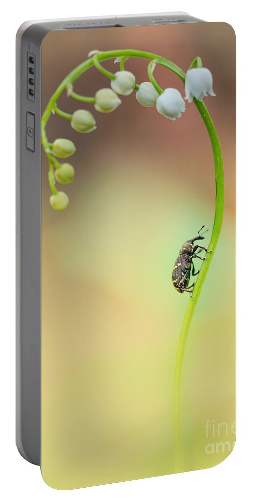 Flower Portable Battery Charger featuring the photograph Lilly Of The Valley by Jaroslaw Blaminsky