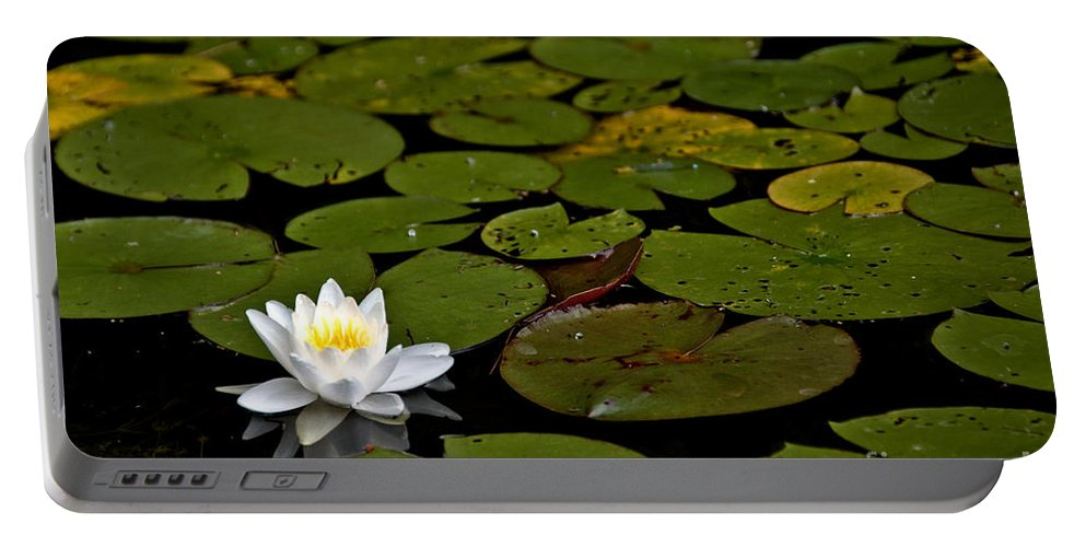Lily Portable Battery Charger featuring the photograph Lily And Pads by Cheryl Baxter