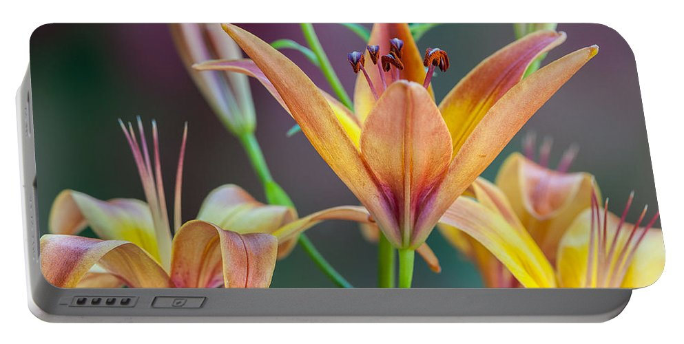 Lily Portable Battery Charger featuring the photograph Lily From The Garden by Randy Walton