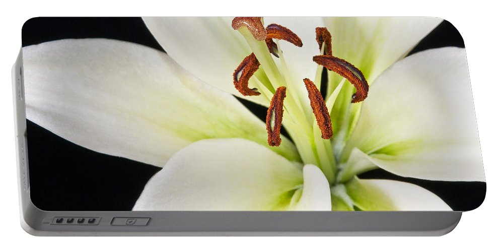 Lily Portable Battery Charger featuring the photograph Lily In Winter by Georgette Grossman