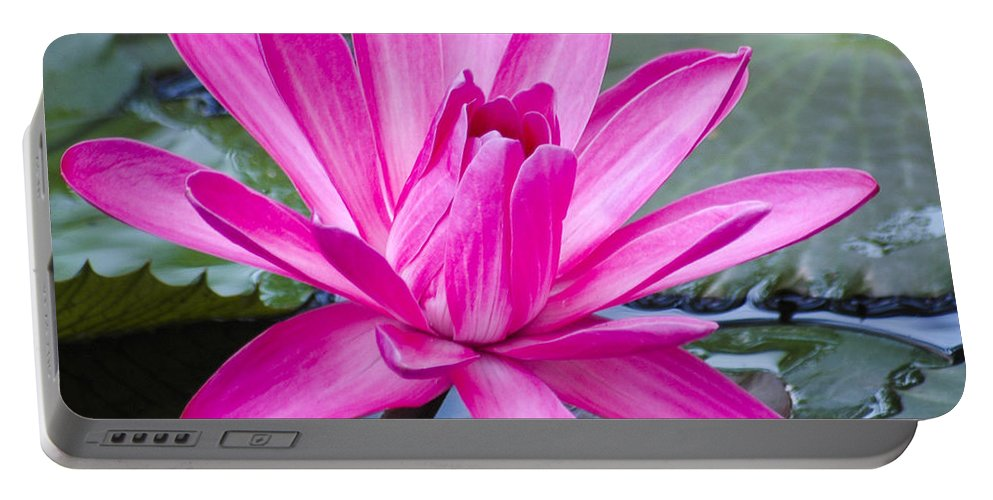 Water Lily Portable Battery Charger featuring the photograph Lily Petals by Carolyn Marshall