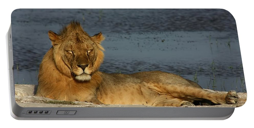 Lion Portable Battery Charger featuring the photograph Lion by Amanda Stadther